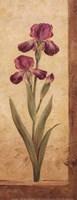 """4"""" x 10"""" Iris Pictures"""