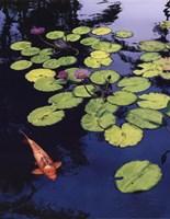 Koi Pond I Fine Art Print
