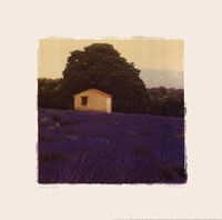 Lavender Country - Mini Fine Art Print