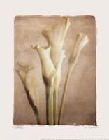 """Poetica I - Mini by Amy Melious - 8"""" x 10"""""""