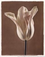 Lumiere Tulip I Fine Art Print