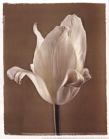 """Lumiere Tulip II by Amy Melious - 8"""" x 10"""""""