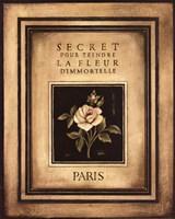 Les Fleurs De Paris I Framed Print