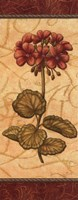 Red Passion Geranium - Petite Fine Art Print