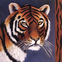 "12"" x 12"" Tiger Pictures"