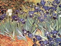 Irises in the Garden, Saint-Remy, c.1889 Fine Art Print