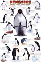 Penguins Chart Wall Poster