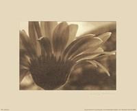 "Gerberas I by Judy Silverstein - 10"" x 8"", FulcrumGallery.com brand"