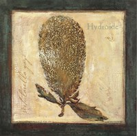 Hydroide Fine Art Print