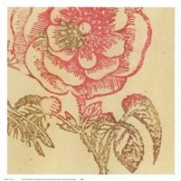 Coral Rose Fine Art Print