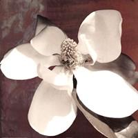 Magnolia Blue I Fine Art Print