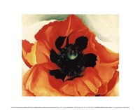 Poppy, 1927 Framed Print