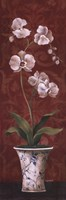 "Organic Orchids II by Eugene Tava - 12"" x 36"""