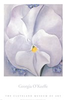 White Pansy Framed Print