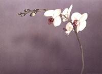 Orchid II Fine Art Print