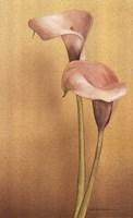 Calla II Fine Art Print