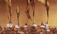 Gilden Tulips Fine Art Print