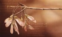Thacker's Tree And Flight Fine Art Print