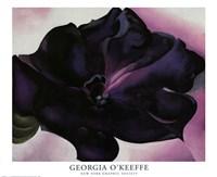 Petunia Fine Art Print