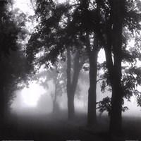 Misty Pathway Fine Art Print