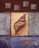 Conch Fine Art Print