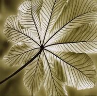 Autumn Leaf II Fine Art Print