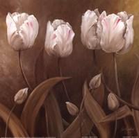 Sepia Tulips