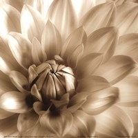 Sepia Bloom III Framed Print