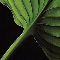 Palm I Framed Print