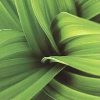 Palm II Framed Print