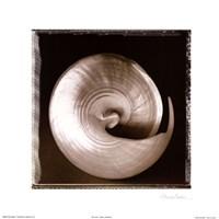 Shell-Egance I Fine Art Print
