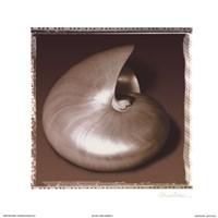 Shell-Egance II Fine Art Print