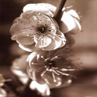 Blossom II Framed Print