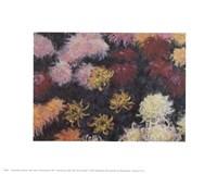 Chrysanthemum, 1897 - close up Fine Art Print