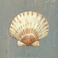 Scallop Shell Fine Art Print
