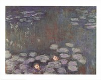 Water Lilies (dark) Fine Art Print