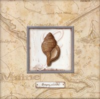 Sea Treasure IV - mini Fine Art Print