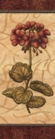 Red Passion Geranium - mini Fine Art Print