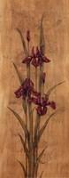 Iris of Delos I Mini