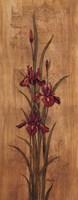 "Iris of Delos II - mini by Paul Brent - 8"" x 20"""