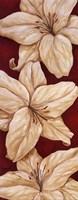 Bella Grande Lilies