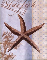"""11"""" x 14"""" Starfish Pictures"""
