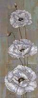 "Florentine Poppies - mini by Paul Brent - 8"" x 20"" - $9.99"