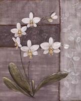 Orchid Shimmer II - mini Framed Print