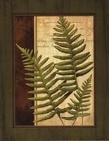 Fern Grotto III Fine Art Print