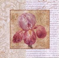 "Le Jardin II by Pamela Gladding - 12"" x 12"""