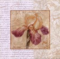 "Le Jardin III by Pamela Gladding - 12"" x 12"""