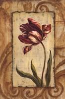 Classic Tulip II Fine Art Print