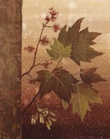 Maple Leaves Fine Art Print