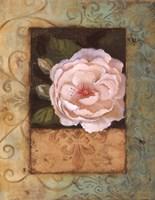 """Antique Rose II by Jillian Jeffrey - 11"""" x 14"""""""